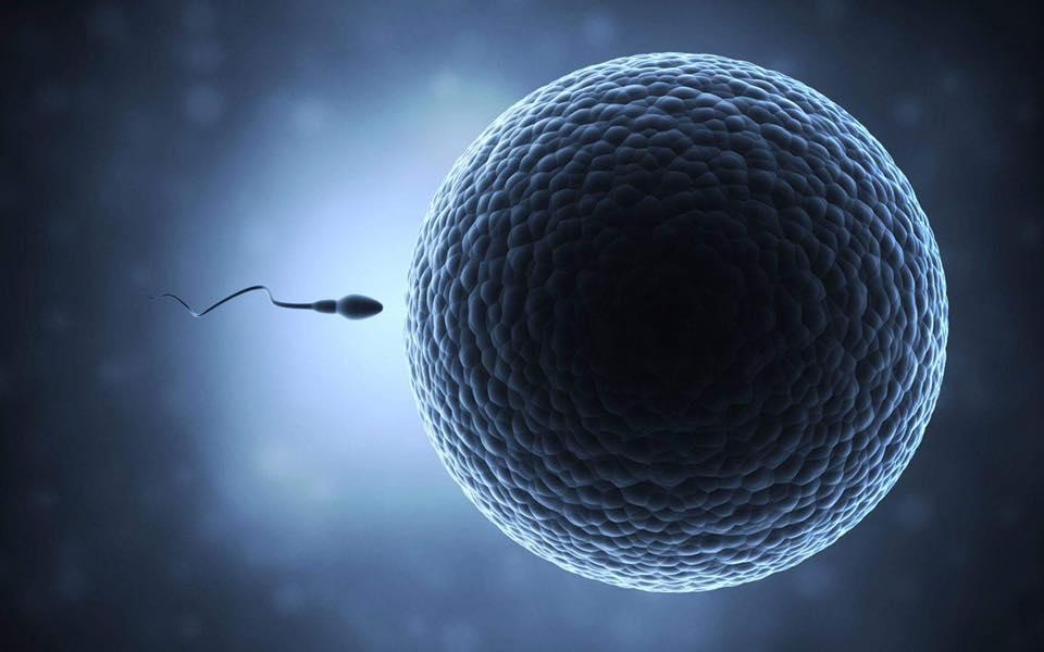 Durata de viața a spermei după ejaculare!